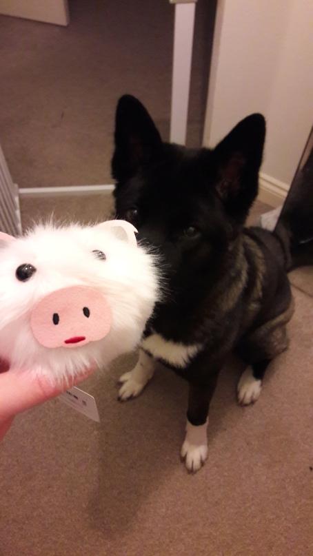 Luna Pig